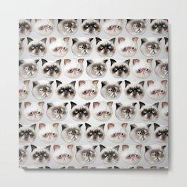 Studley Cats Metal Print