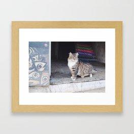 Cats of Istanbul II Framed Art Print