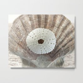 """ArtfulNotions 281"" Seashell Art by Murray Bolesta Metal Print"