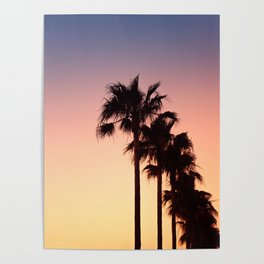 Row of Palm Trees at Sunset on Mallorca, Balearic Islands, Spain Poster
