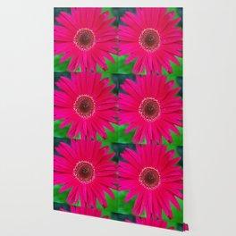 Pop of Color Wallpaper