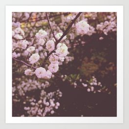 Soft Pink Blossoms Art Print