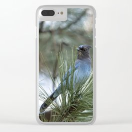 Steller's Jay, No. 1 Clear iPhone Case