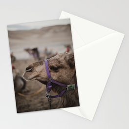 Camel at Beduoin Tent in The Negev, Israel Stationery Cards