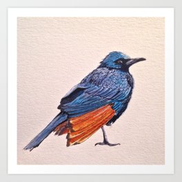Birds: Starling Series | Red-winged Starling Art Print