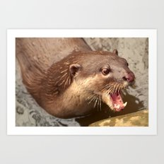 Smooth Coated Otter  Art Print