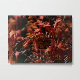Crocosmia Metal Print