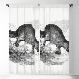 Duck-billed platypus from Adventures of a Gold-Digger (1856) Blackout Curtain