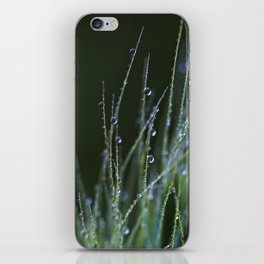 dew drops in abstract iPhone Skin