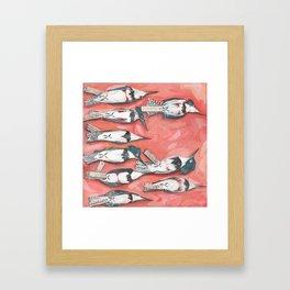 Belted Kingfisher Specimens Framed Art Print