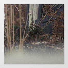 untitled photo1 Canvas Print