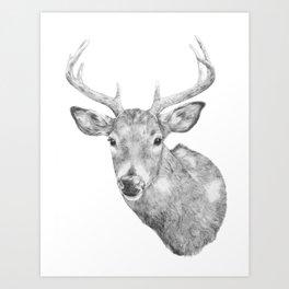 Deer Head Art Print