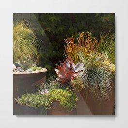 Succulent Succulents in Terra Cotta Pots Metal Print