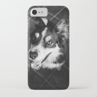 border collie iPhone & iPod Cases featuring Tri-coloured border collie. by liamgrantfoto
