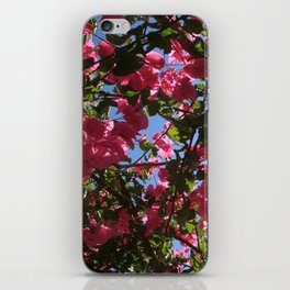 Perfect Pink Bougainvillea In Blossom iPhone Skin