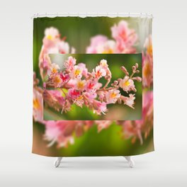 Aesculus red chestnut tree blossoms Shower Curtain