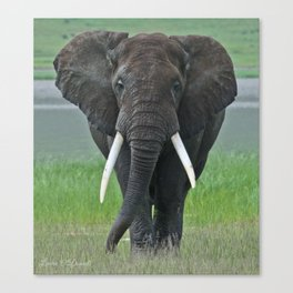 Ngorongoro Ele Canvas Print