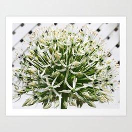 457 - White Flower Art Print