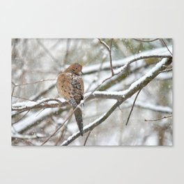 Winter Dove Canvas Print