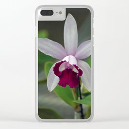 Cattleya Orchid (The Corsage Orchid) Clear iPhone Case