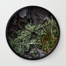 Macrophotography. Moss and lichen. Wall Clock