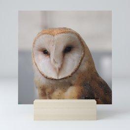 Barn Owl on Alert Mini Art Print