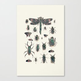 Collection of Insects Canvas Print