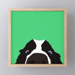 Begging Border Collie Framed Mini Art Print