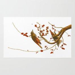 Hermit Thrush Bird Rug