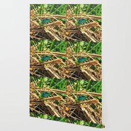 curious lizard Wallpaper