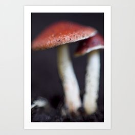 Red Capped Toadstools Art Print