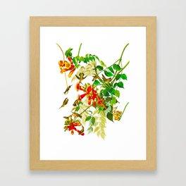 Ruby-throated Humming Bird Framed Art Print
