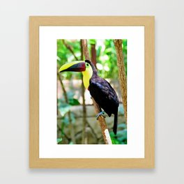 Yellow-Throated Toucan Framed Art Print