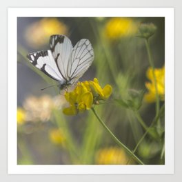 White Butterfly on Yellow Flower Art Print
