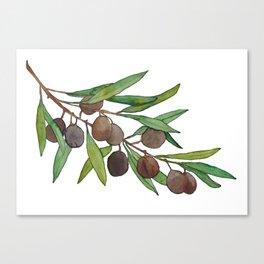 Olive leaf Canvas Print