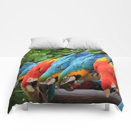 A Pandemonium Line Up Comforters