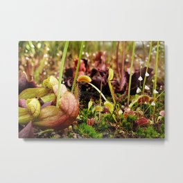 Carnivorous plant #2 Metal Print