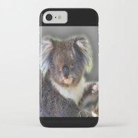 koala iPhone & iPod Cases featuring Koala by SwanniePhotoArt