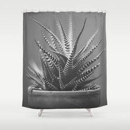 Zebra Haworthia (Stripes in Black and White) Shower Curtain