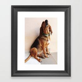 Bruno Jura Dog portrait Framed Art Print