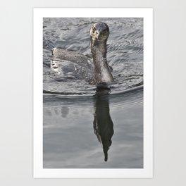 Cormorant Stare Art Print