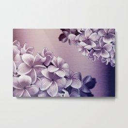 Purple Plumerias Ombre Metal Print