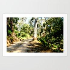Along a forest Road Art Print