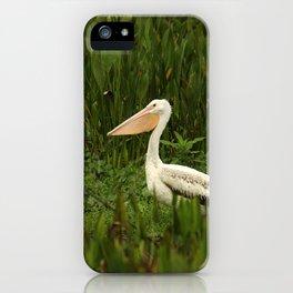 American White Pelican iPhone Case