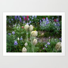 Washington Flora Art Print