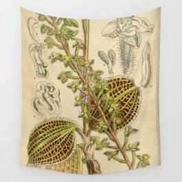 Macodes sanderiana, Orchidaceae 1918 Wall Tapestry