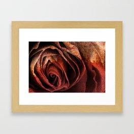 Bleeding Rust Rose Framed Art Print