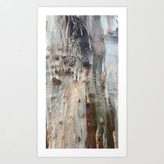 Colors of a Eucalyptus Art Print