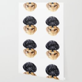 Toy poodle Blond & Black Wallpaper