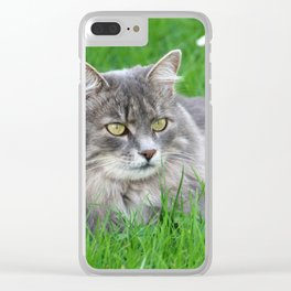 Persian cat in the grass Clear iPhone Case